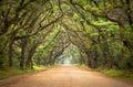 Arbres de chêne rampants de chemin de terre fantasmagorique de compartiment de botanique Photographie stock libre de droits