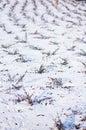Arbustos en nieve Imágenes de archivo libres de regalías