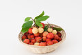 Arbutus strawberry basket with two colors red and yellow Stock Images