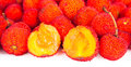 Arbutus unedo Stock Photography