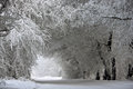 Arch of snowy trees huddled together covered with a thick layer frost Stock Photos