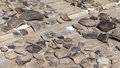 Archaeological objects found during excavations at the troitskiy excavation in veliky novgorod Royalty Free Stock Image