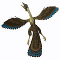 Archaeopteryx on white is known as the earliest bird and was a bridge species between dinosaurs and modern birds Royalty Free Stock Photos