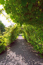 Arched alley in garden oslo norway Royalty Free Stock Photography