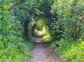Arched footpath an overgrown in spring Royalty Free Stock Images