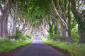 Arched trees Royalty Free Stock Images