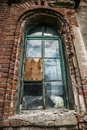 Arched window on red brick wall of old mansion. White cat sits on a windowsill Royalty Free Stock Photo