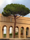 Arches and the pine tree