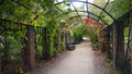 Archway decore arch in autumn park with wild climber grapes Stock Photography