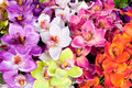 Arcolorful of artificial  orchid flower Royalty Free Stock Images