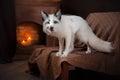 Arctic fox, Vulpes lagopus Royalty Free Stock Photo