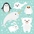Arctic polar animal set. White bear, owl, penguin, Seal pup baby harp, hare, rabbit, narwhal, unicorn-fish. Kids education cards. Royalty Free Stock Photo