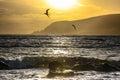 Arctic terns in Shetland Royalty Free Stock Photo