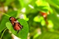 Arcus butterfly on green leaf in aviary an world south florida Stock Photography
