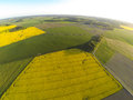 Areal view of blooming raps field Royalty Free Stock Photo