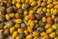 Areca nut drying under the sun Royalty Free Stock Photo