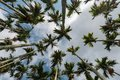 Areca tree and blue sky Stock Image