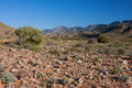 Arid desert riverbed dry landscape with panoramic views of shrub and mountains Stock Photos