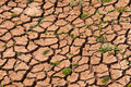 Arid land with green plant Stock Photo