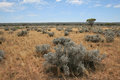 The arid Nullarbor Stock Photography