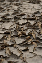 Arid weather piece of the ground by Stock Images