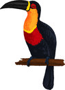 Ariel toucan. Bird. Vector Stock Photography