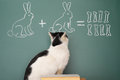 Arithmetic education idea joke about dreamy cat studying Stock Photography