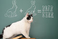 Arithmetic education idea joke about dreamy cat studying Royalty Free Stock Photos