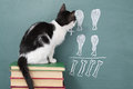 Arithmetic school idea joke about a educated cat studying Stock Images