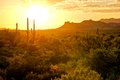 Arizona desert sunset view of the with cacti and mountains Royalty Free Stock Photography