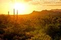Arizona desert sunset Royalty Free Stock Photo