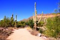 Arizona desert trail through a park near phoenix Royalty Free Stock Images