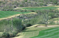 Arizona golf course saguaro studded in tucson Royalty Free Stock Image