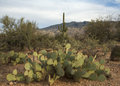 Arizona landschaft Stockbilder