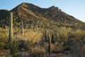 Arizona's Saguaro National Park Royalty Free Stock Photos