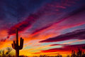 Arizona Saguaro cactus sunset Royalty Free Stock Photo