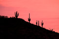 Arizona sunrise saguaro cactus stand silhouetted against an sunset Royalty Free Stock Images