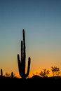 Arizona sunset over s saguaro national park Royalty Free Stock Photography