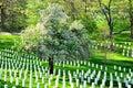 Arlington national cemetery near to washington dc in spring Stock Image