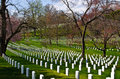 Arlington national cemetery rows of unmarked tombstones at washington d c Royalty Free Stock Images