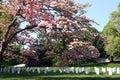 Arlington-nationaler Kirchhof Lizenzfreies Stockfoto