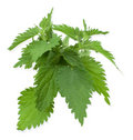 Armful of a green nettle Royalty Free Stock Image