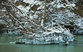 Armoured ice forms over branches on a river Royalty Free Stock Photo