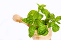 Aromatic plant basil white background Royalty Free Stock Images