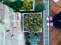 Aromatic plants in the garden top view of Royalty Free Stock Images