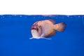 Arowena fish series Royalty Free Stock Photo