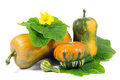 Arrangement of pumpkins with green leaves and yellow flower isolated on white background Royalty Free Stock Photography