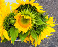 Arrangement of sunflowers at the market Royalty Free Stock Photo