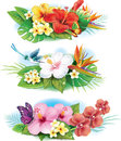 Arrangement from tropical flowers set of Royalty Free Stock Images