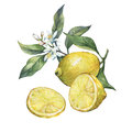 Arrangement with whole and slice fresh citrus fruit lemon with green leaves and flowers.